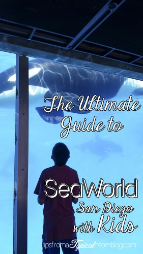 The Ultimate Guide to SeaWorld with Kids