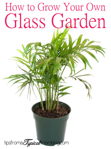 """How to Create a """"Glass Garden"""" for Apartment Dwellers"""